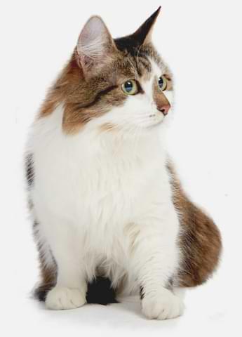 взять кошку в москве, каталог кошек и собак в москве, кошки из приюта, собаки из приюта