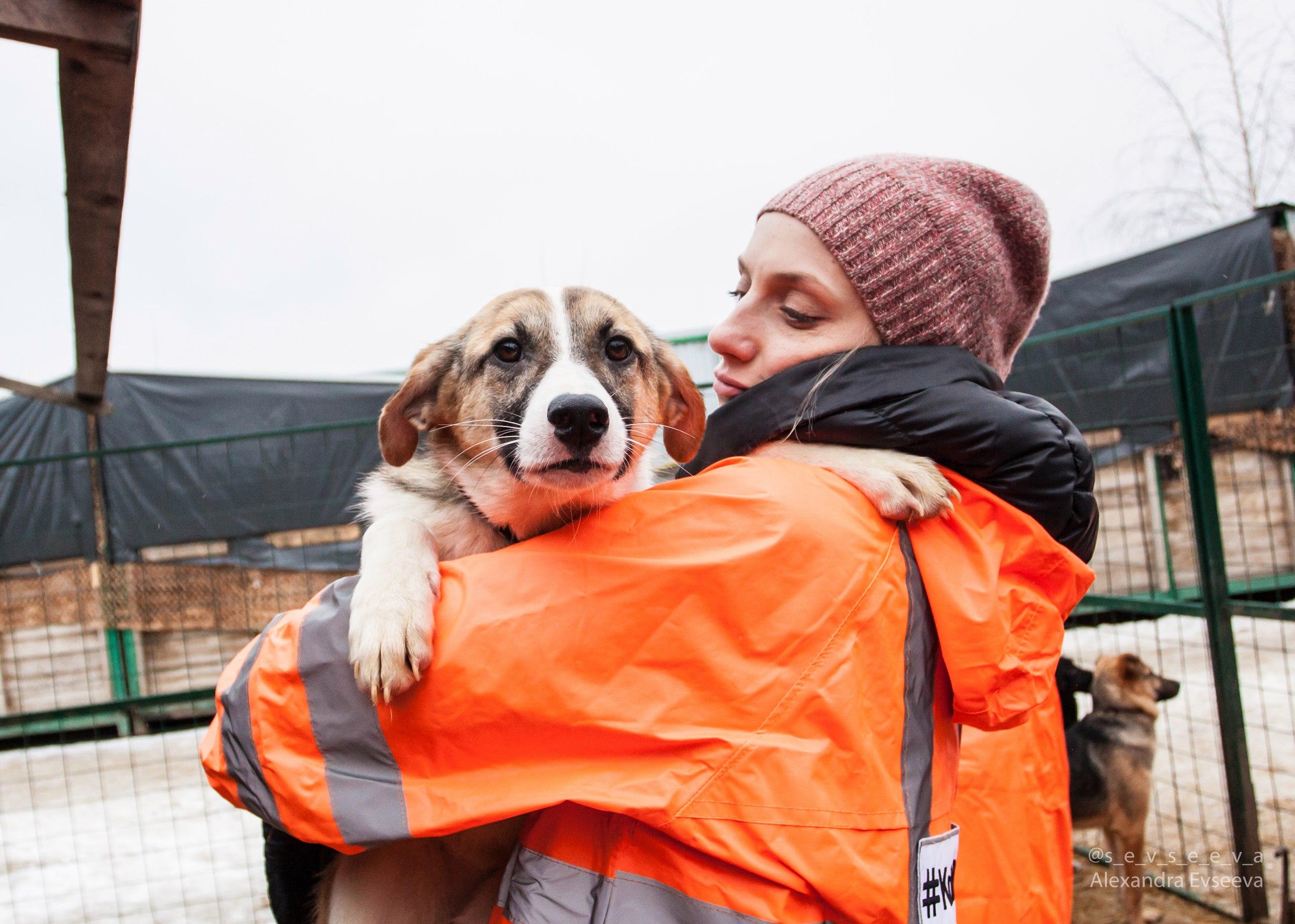 Волонтеры с собаками из приюта
