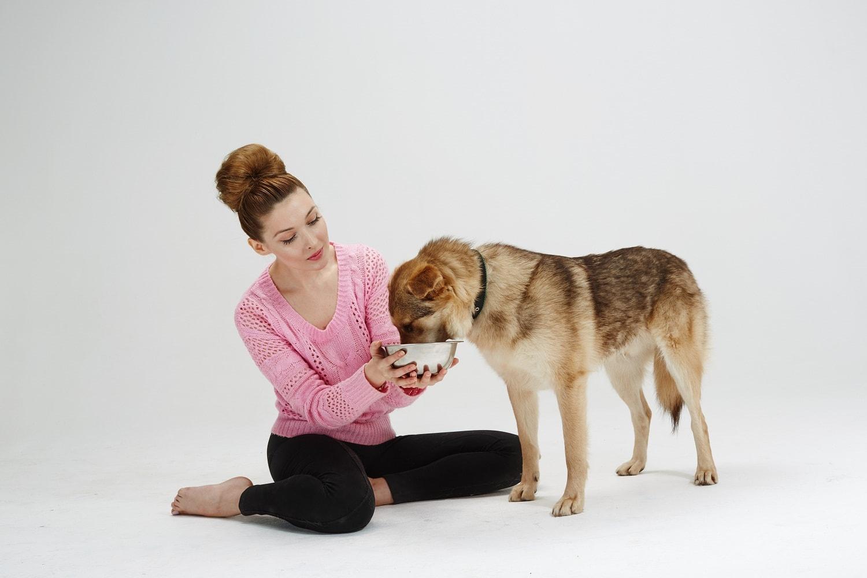 Приют для бездомных собак и кошек в Москве