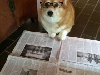 Собака и газета