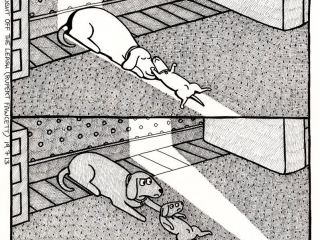 Собаки и солнце