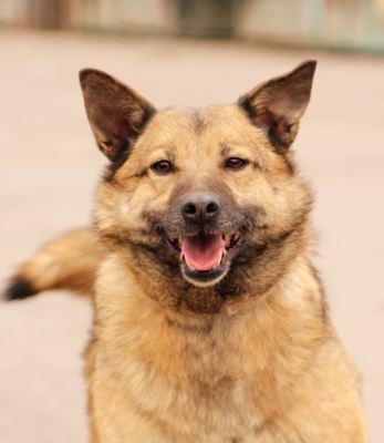 Взять собаку Сима из приюта Бирюлево