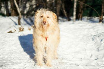 Взять собаку Николь из приюта в дар Бирюлево