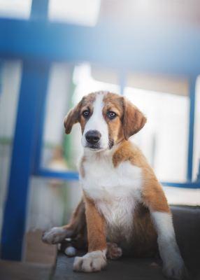 Взять щенка Истон из приюта в дар Бирюлево