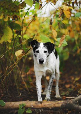 Собака Мия из приюта ищет дом Бирюлево
