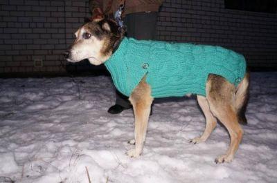 Собаку Барсик взяли из приюта! Бирюлево
