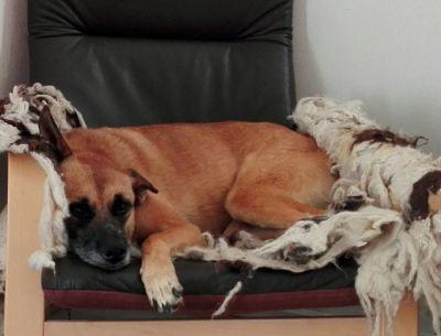 Собака из приюта Боня нашла дом Бирюлево