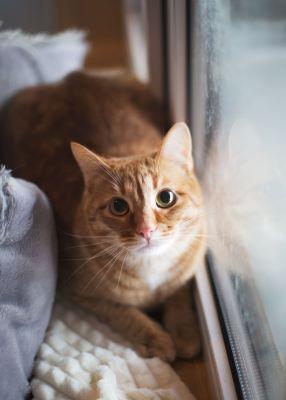 Взять котов Абрикоса и Леву в добрые руки из приюта Бирюлево