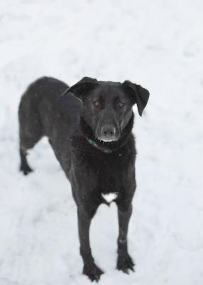 Взять собаку Моцарелла из приюта Бирюлево  Бирюлево