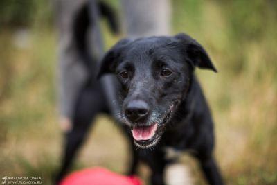 Собака Тошка из приюта нашла дом Бирюлево