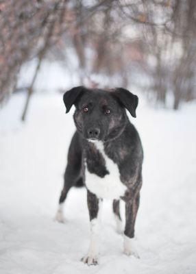 Взять собаку Майки из приюта Бирюлево Бирюлево