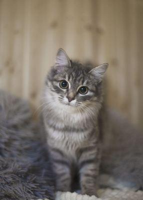 Взять кошку Маргоша из приюта в добрые руки Бирюлево