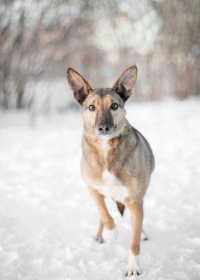 Взять собаку Масяня из приюта Бирюлево Бирюлево
