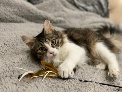 Котенок Эся из приюта нашла дом Бирюлево
