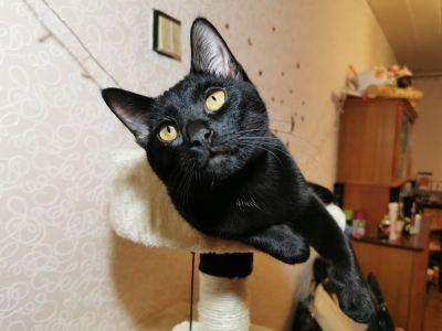 Кот Маркус из приюта нашел дом Бирюлево