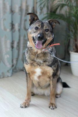 Собака Джерри из приюта ищет дом Бирюлево