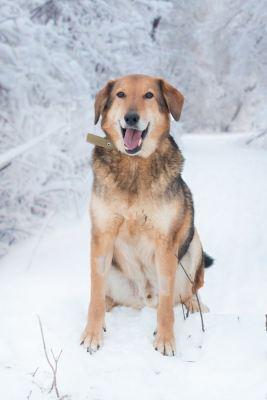 Взять собаку Рик из приюта Бирюлево