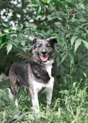 Взять собаку Аврора из приюта Бирюлево