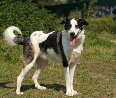 Взять собаку Рада из приюта Бирюлево