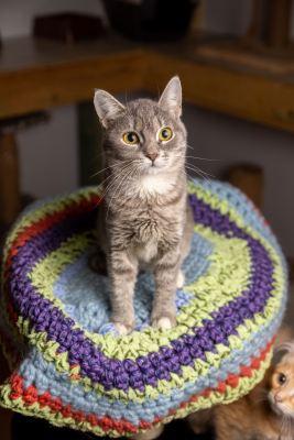 Взять котенка Милли из приюта в дар Бирюлево
