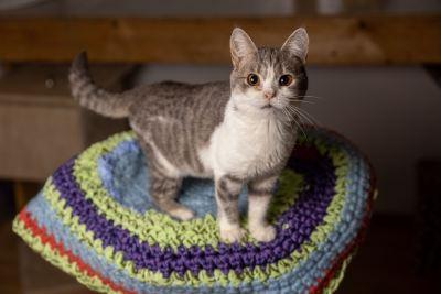 Кошка Бони из приюта Бирюлево ищет дом Бирюлево