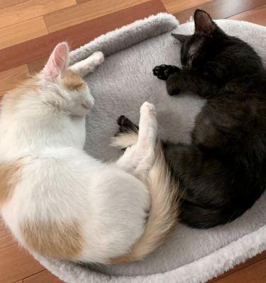 Котята Ширла и Рыжик из приюта нашли дом! Бирюлево