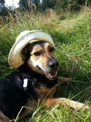 Собака Тася нашла дом Бирюлево