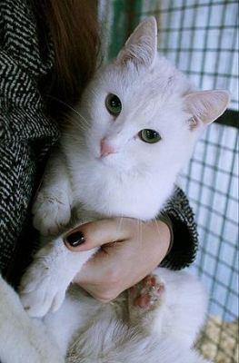 Кошка Равенна нашла дом Бирюлево