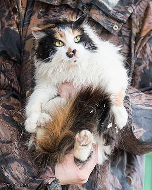 Кошка Гиза - нашла дом Бирюлево