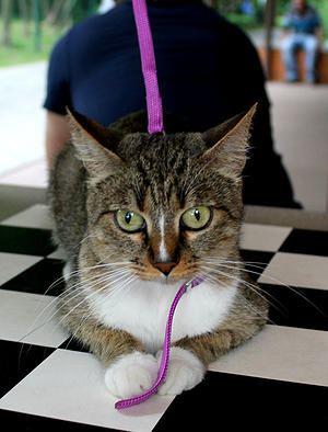 Кошка Ассайя - нашла дом Бирюлево