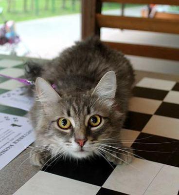 Кот Леон - нашел дом Бирюлево