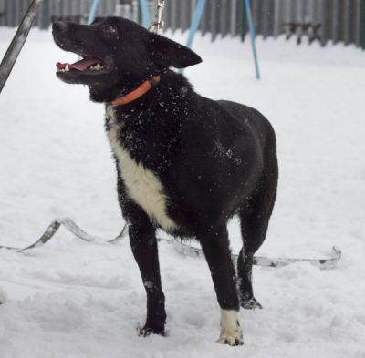 Собака Чара из приюта нашла дом Бирюлево