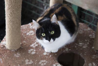 Взять кошку Поля из приюта Бирюлево