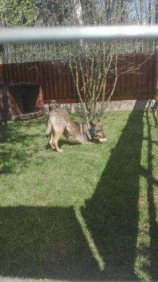 собака Синий из приюта нашла дом Бирюлево