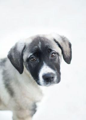 Взять щенка Грей из приюта Бирюлево в добрые руки Бирюлево