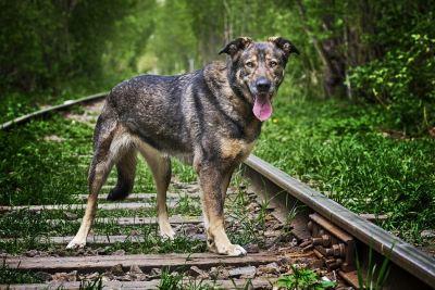 Взять собаку Вита из приюта в дар Бирюлево