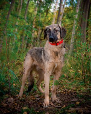 Взять собаку подростка Фьорд из приюта в добрые руки Бирюлево