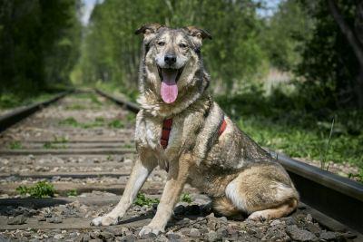 Взять собаку Люба из приюта в добрые руки  Бирюлево