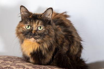 Кошка Мура из приюта ищет дом Бирюлево