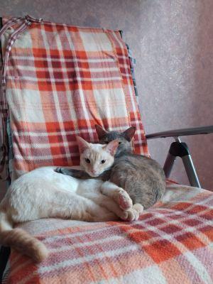 Кошки Ассоль и Белла из приюта Бирюлево нашли семью Бирюлево