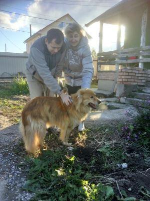 собака Айриш из приюта нашла дом Бирюлево
