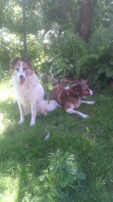 Собаки Майя и Бакси из приюта нашли дом! Бирюлево