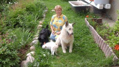 Собака Белла из приюта нашла дом Бирюлево