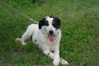 Собака Бим из приюта нашла дом Бирюлево