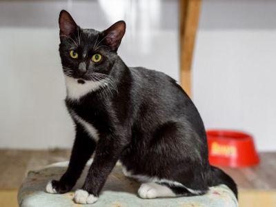 Взять кота Флинт из приюта в дар Бирюлево