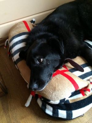Собака Черныш из приюта нашла дом Бирюлево