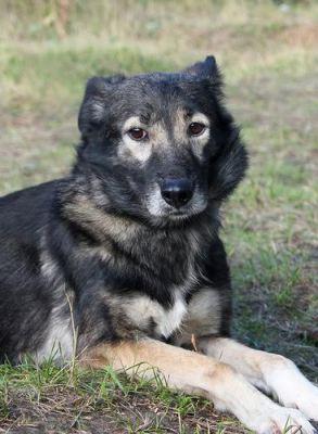 Собака Чапа из приюта нашла дом Бирюлево