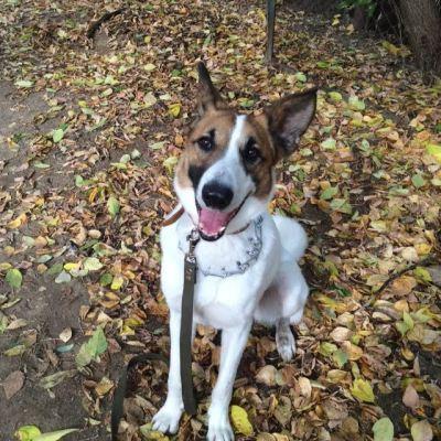 Пес из приюта Чарли нашел дом! Бирюлево