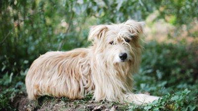 Взять собаку Чуи из приюта в добрые руки Бирюлево