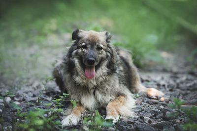 Взять собаку Мокко из приюта в добрые руки Бирюлево